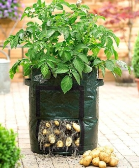 Potato Grow Bag - Fancy Red